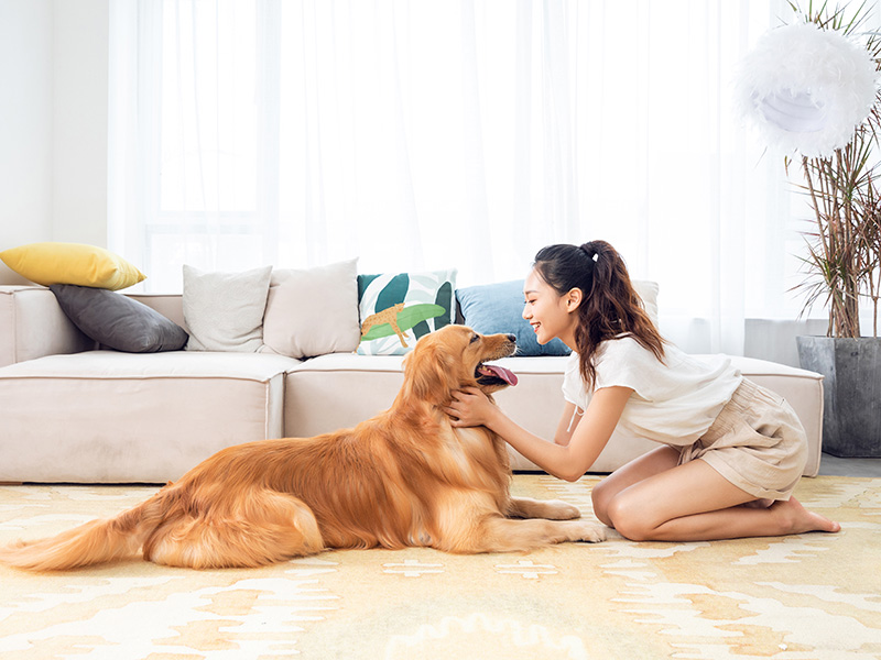 All the year round, how to do a good job of pet care